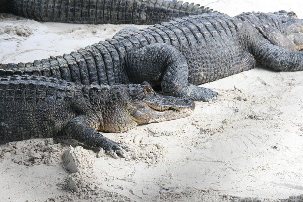 Everglades Safri Park